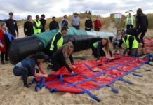 How a 3-tonne inflatable whale is teaching people to help with mass strandings