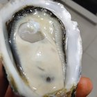 Some dope oysters from Bruny island! Tasmania ????
